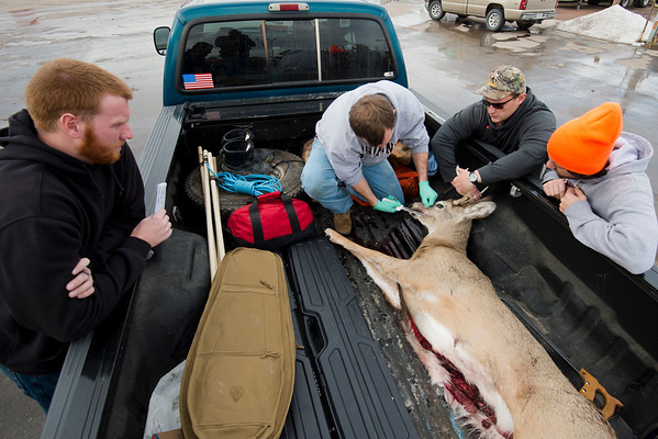 Chadron State College students Brandon Pippenger of Banning, California, Thomas Linegar of Hemingford, Dylan Brant of Canon City, Colorado, and Brandon Schwenk of Omaha, age a whitetail buck that was checked in at Chadron. (NEBRASKAland/Justin Haag)